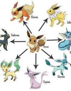 Eevee evolutions chart also the pokemon anime amino rh aminoapps
