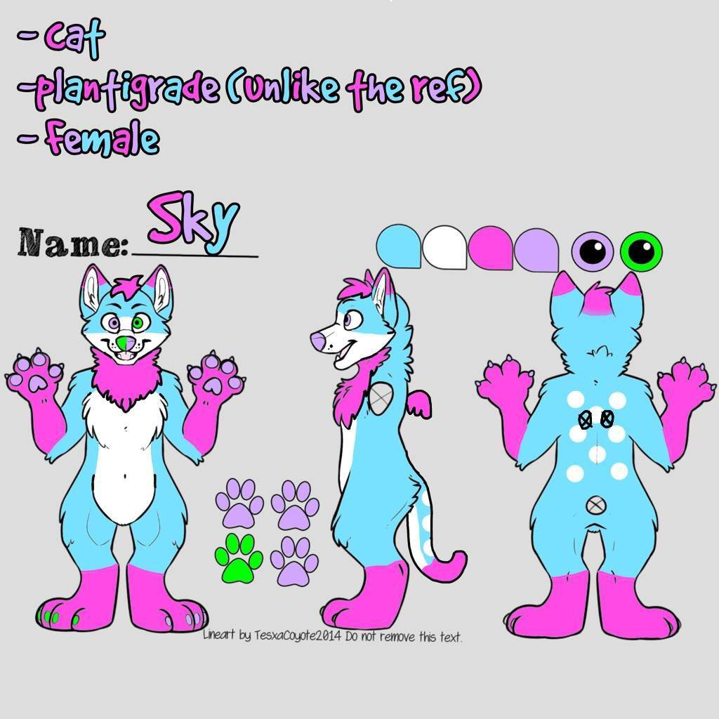 Sky The Cat S Reference Sheet
