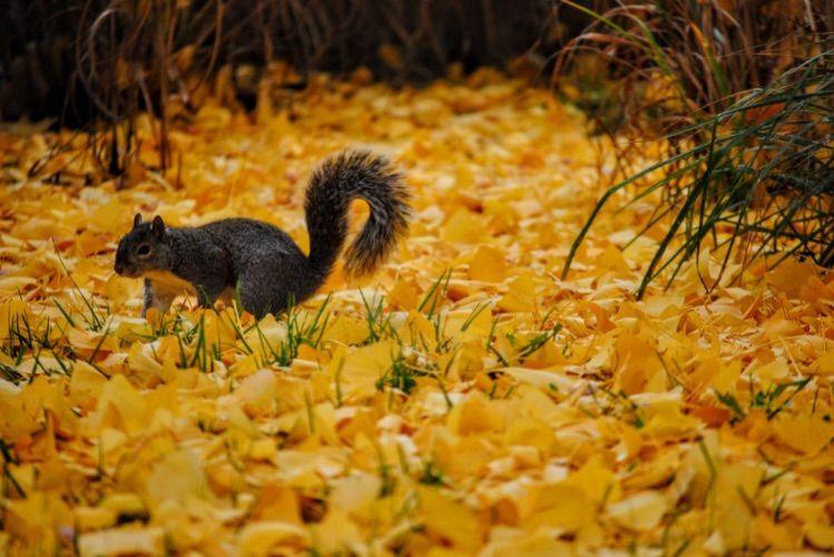 squirrel spirit animal amd