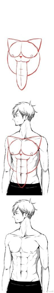 How To Draw Anime Abs : anime, Anime, Drawing