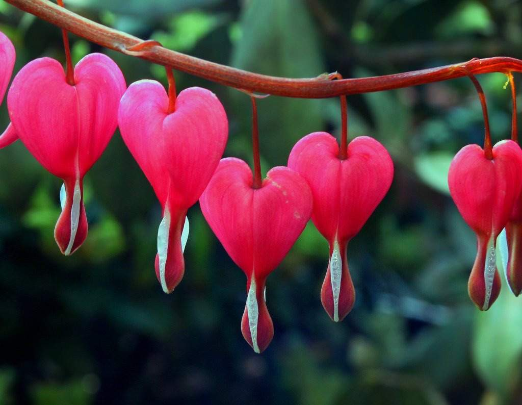 bleeding hearts pagans witches