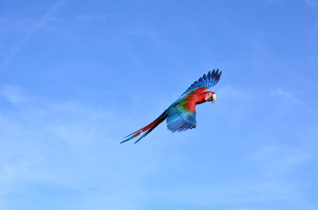 free flight weekend birds