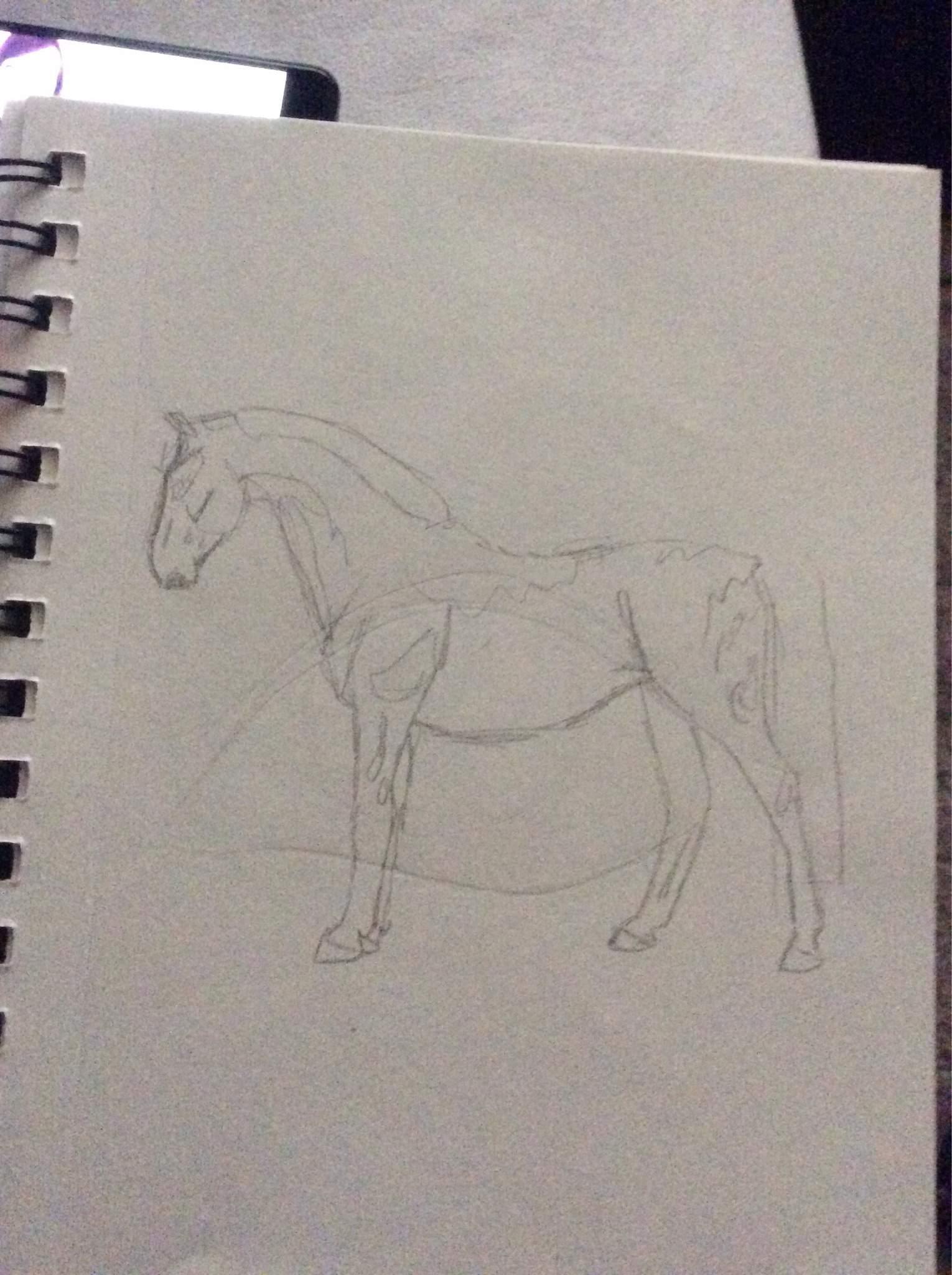Full Body Horse Drawing : horse, drawing, Horses, Equestrian, Amino