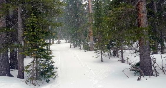 brainard-trail