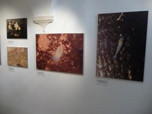 g-izlozba-Živo špiljsko blago dubrovačkog područja-09