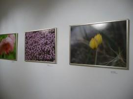 g-izlozba-Flora otoka Korčule i poluotoka Pelješca-03