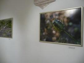 g-izlozba-Flora otoka Korčule i poluotoka Pelješca-04