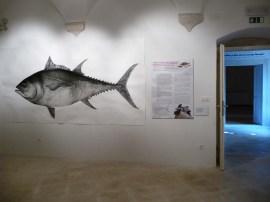 g-izlozba-Kolika je bila tuna u našemu Muzeju-05