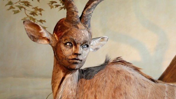 Human- Faces Animal Bodies Taxidermy Art