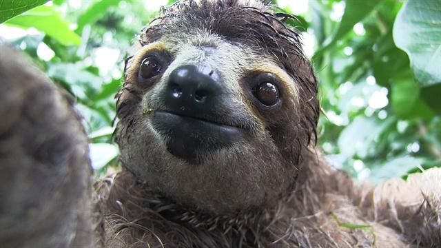 Cute Cartoon Face Wallpapers Inside A Baby Sloth Orphanage And Rescue Center