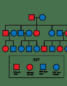 also understanding pedigrees  genetics for igcse pmg biology rh pmgbiology