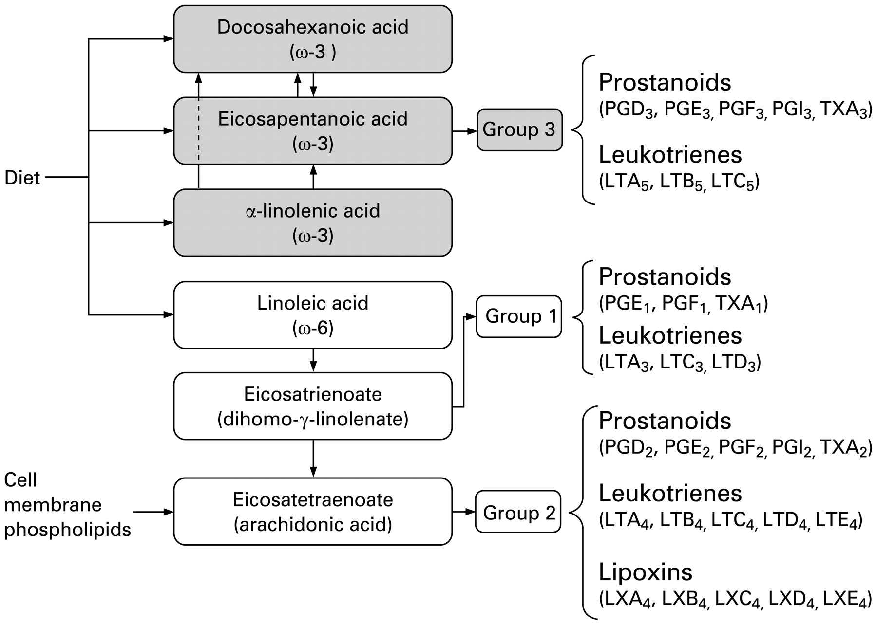 Omega3 fatty acids a comprehensive review of their role in health and disease  Postgraduate