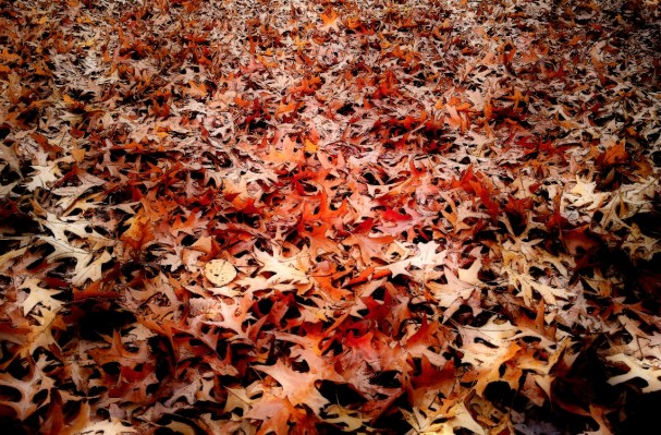 Cartoonesk leaves with beautiful orange and red colors