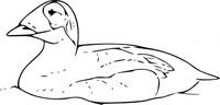 duck commander vector