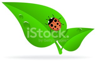 ladybug green leaf stock vectors