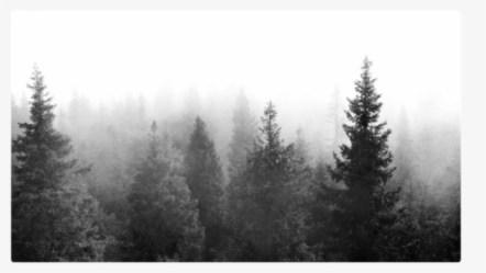 Forest Background PNG Images Transparent Forest Background Image Download PNGitem
