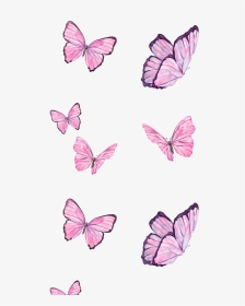 Pink Butterfly Png : butterfly, Butterfly, Images,, Transparent, Image, Download, PNGitem