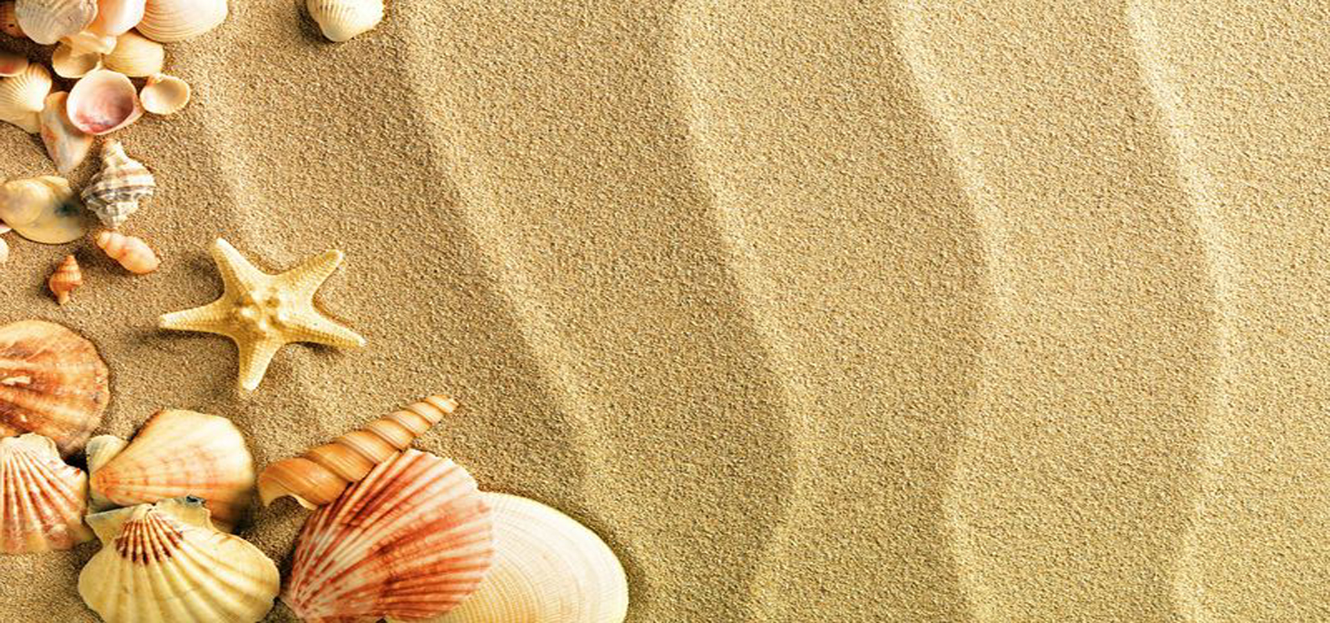Fresh And Beautiful Beach Background Sand Shell Poster