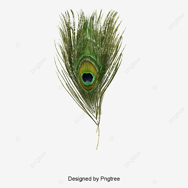 hight resolution of peacock feather
