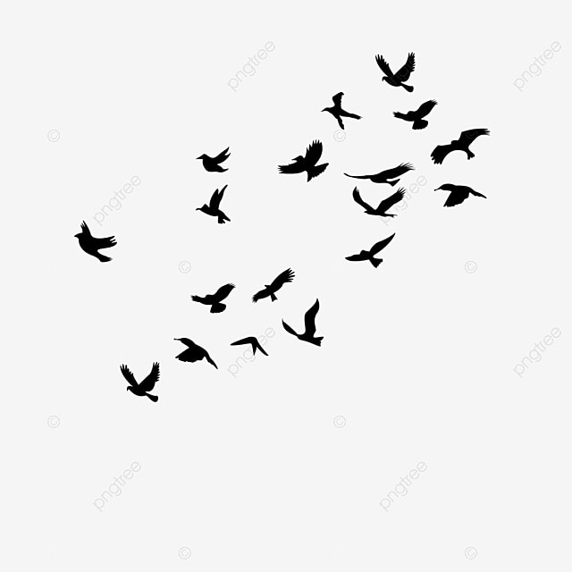 Black Birds, Black, Simple, Bird PNG and Vector with