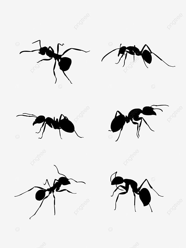 Ant Vector Png, Vector, PSD, and Clipart With Transparent