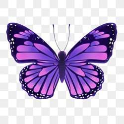 Purple Butterfly Png Vector PSD and Clipart With Transparent Background for Free Download Pngtree