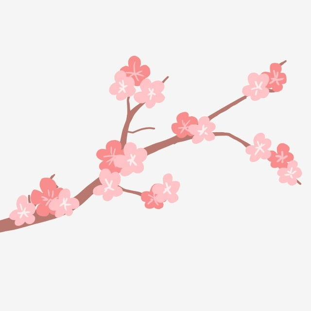 blooming red cherry blossom