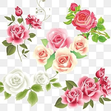 white rose png images