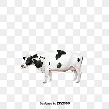 cow png images download