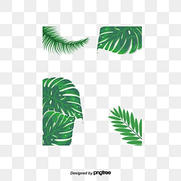 Banana Leaves PNG Images Vectors And PSD Files Free
