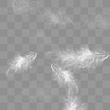 Falling Feathers Wallpaper White Feather Png Images Vectors And Psd Files Free