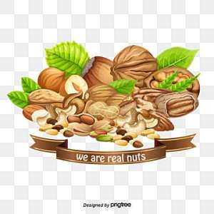 Dry Fruits PNG Images   Vector and PSD Files   Free