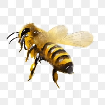 bee png images download