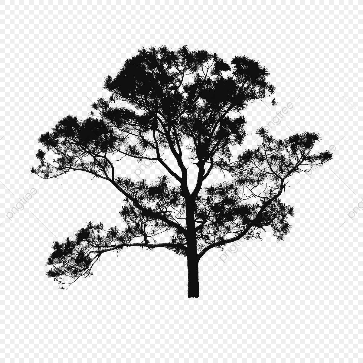 tree plan clipart free