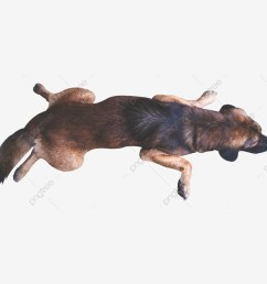 commercial use resource upgrade to premium plan and get license authorization upgradenow sleeping dog  [ 1200 x 1200 Pixel ]
