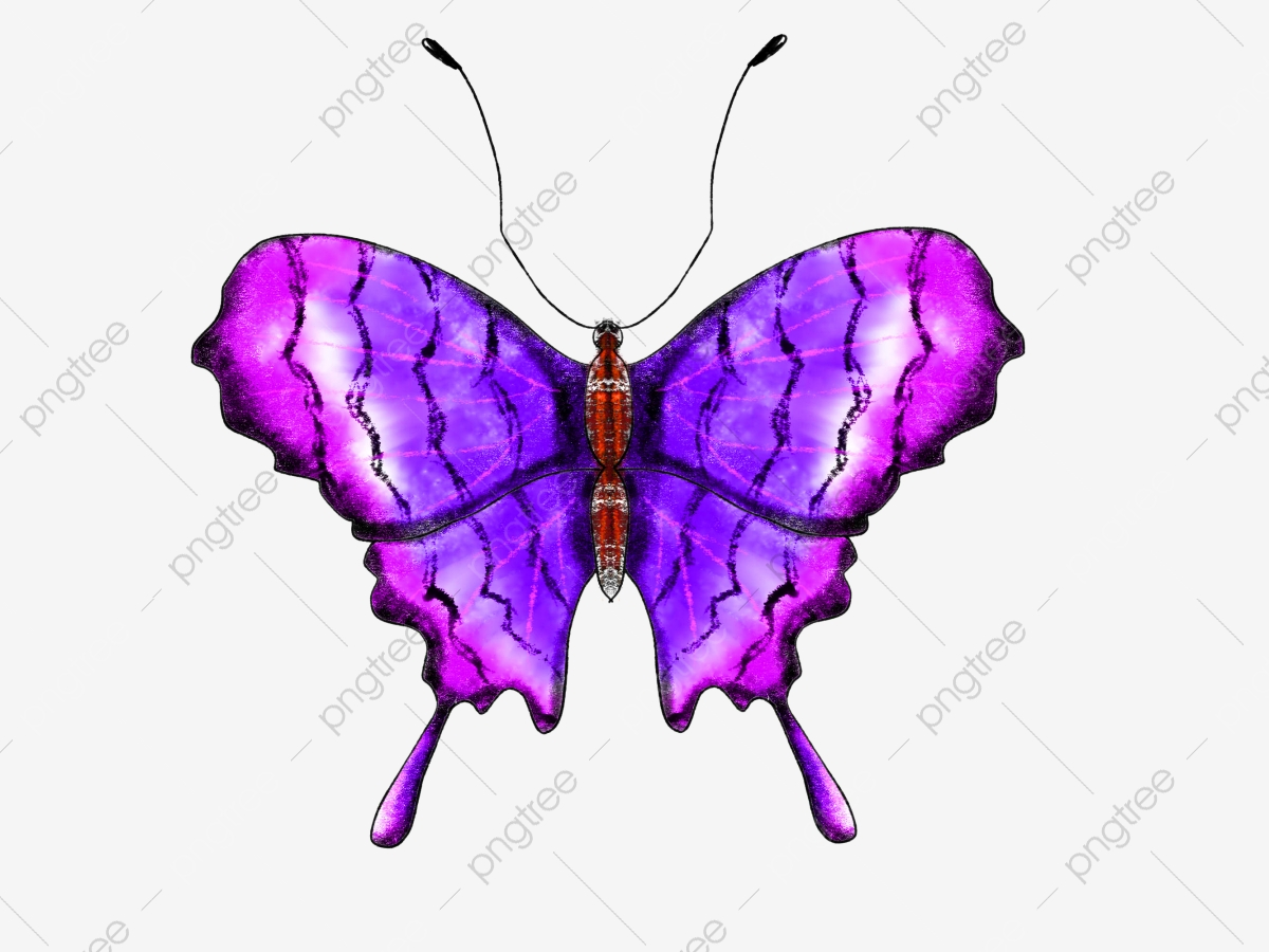 hight resolution of commercial use resource upgrade to premium plan and get license authorization upgradenow butterfly butterfly butterfly clipart
