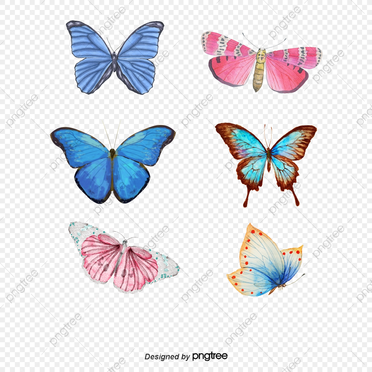 hight resolution of category butterfly