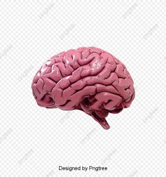 commercial use resource upgrade to premium plan and get license authorization upgradenow human brain brain clipart  [ 1200 x 1200 Pixel ]