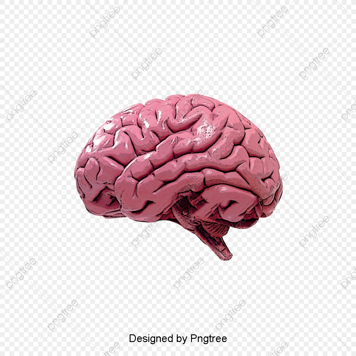 hight resolution of commercial use resource upgrade to premium plan and get license authorization upgradenow human brain brain clipart