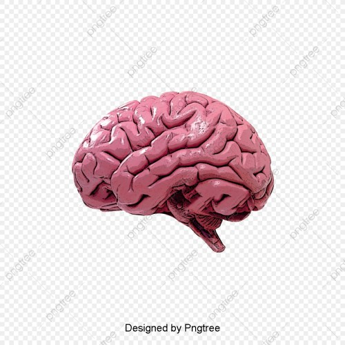 small resolution of commercial use resource upgrade to premium plan and get license authorization upgradenow human brain brain clipart