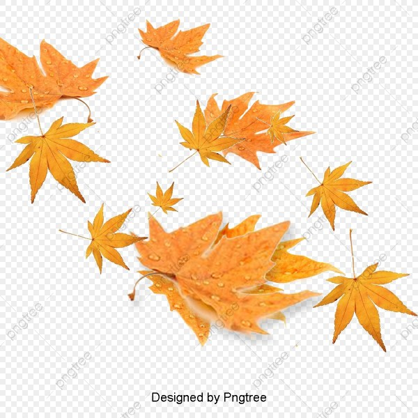 fall leaves png # 1