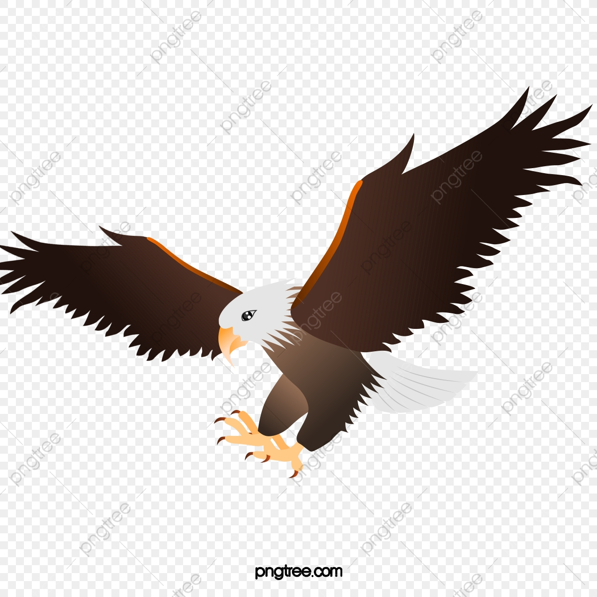 hight resolution of category eagle