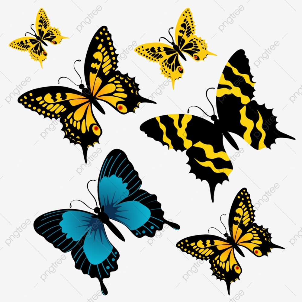 medium resolution of category butterfly
