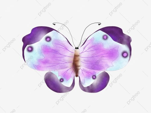 small resolution of category butterfly