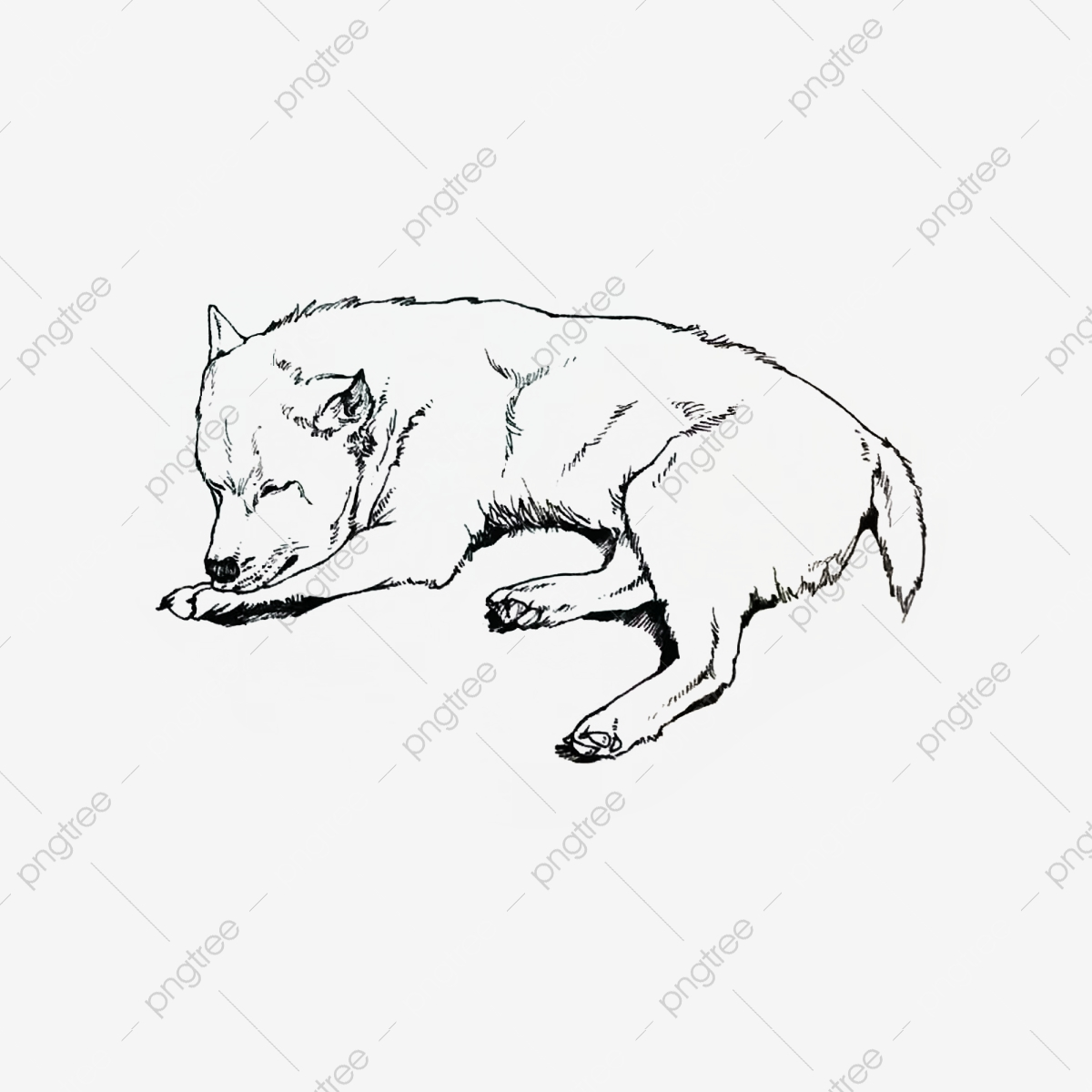 Realistic Dog Linear Sketch Wind Animal Element Puppy Realistic Style Sketching Animals Png Transparent Clipart Image And Psd File For Free Download