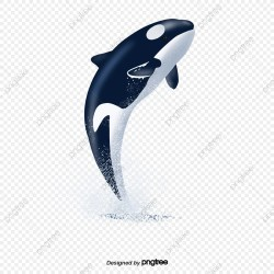 Whale Png Vector PSD and Clipart With Transparent Background for Free Download Pngtree