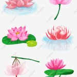 Lotus Flower Design Element Lotus Hand Painted Lotus Yoga Png Transparent Clipart Image And Psd File For Free Download