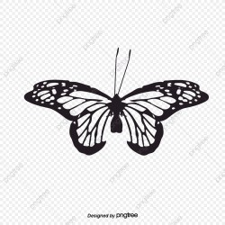 Vector Black And White Butterfly Fengtai Butterfly Silhouette Butterfly Clipart Vector Butterfly Butterfly PNG and Vector with Transparent Background for Free Download