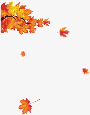 Falling Money 3d Wallpaper Premium Red Maple Leaves Falling In Autumn Fall Red Maple Leaf