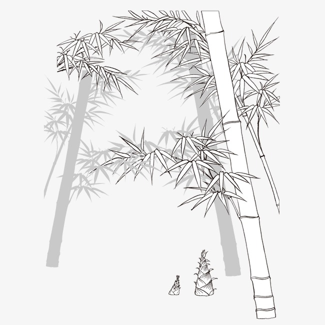 Sketch Bamboo, Bamboo Clipart, Black And White, Sketch PNG